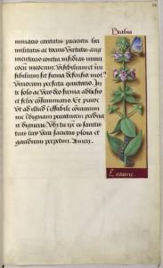 Gallica, les grandes heures d'Anne de Bretagne, extrait