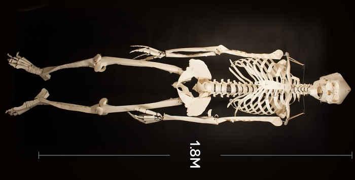 squelette2