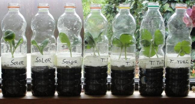 semis en bouteilles plastique